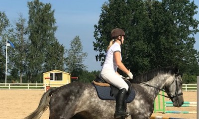 Gelding from CONTATOUR JP for sale! (in Tallinn this week)