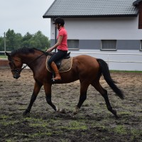 4 y.o. jumping/cross country/dressage prospect