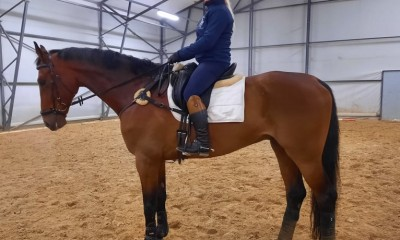 Showjumping horse Dollar