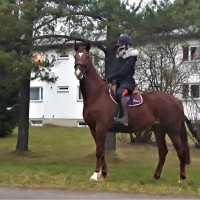 tori hobune CASADERA