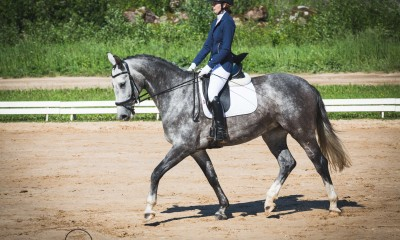 7 yo dressage mare