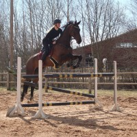 Brave and beautiful holsteiner mare!