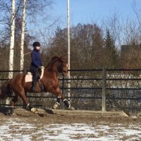 Dressage mare by Bon Coeur