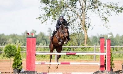 Ideaalne lapse või harrastaja hobune