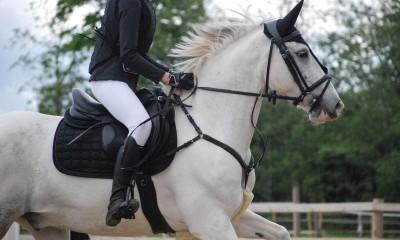 13- aastane kogemustega takistussõidu poni
