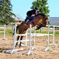 148cm pony mare from Verso de Paulstra (ALMÈ Z) competing at 100cm for sale!
